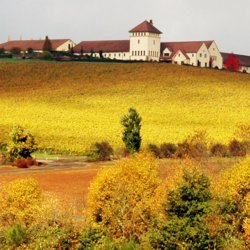 The white buildings of a winery on top of a hill of golden vegetation.