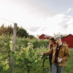 A young man and woman admire the grapevines on a stroll through the vineyards at Tyee Winery.