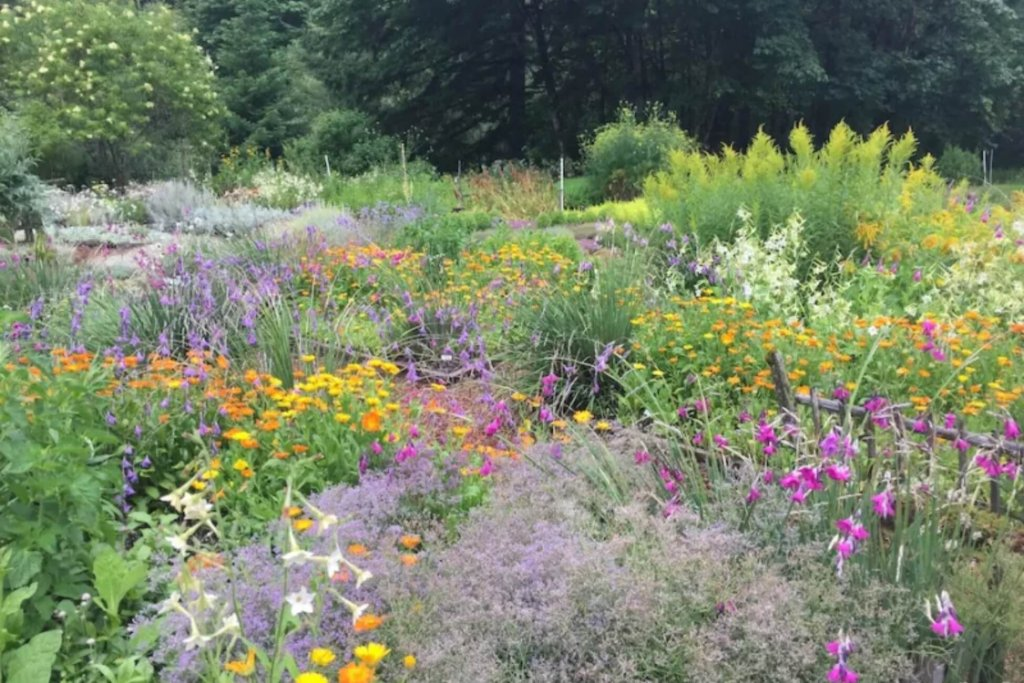 A garden in full bloom with colorful flowers