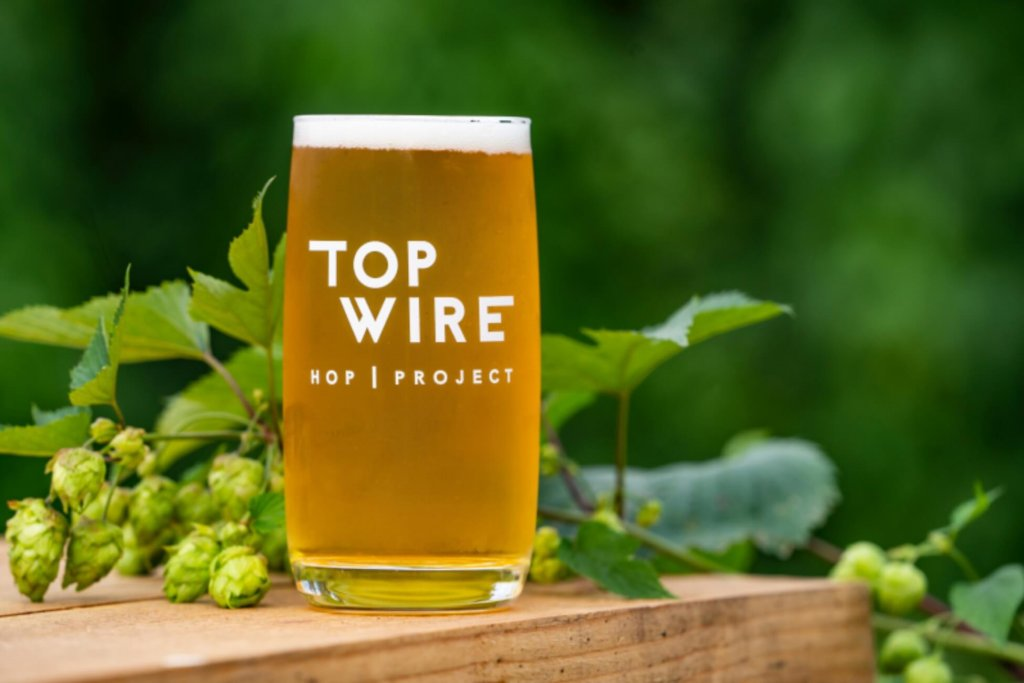 A close up of a craft beer in a Top Wire Hop Project logoed glass sitting on a wooden bean with hops vines behind it.