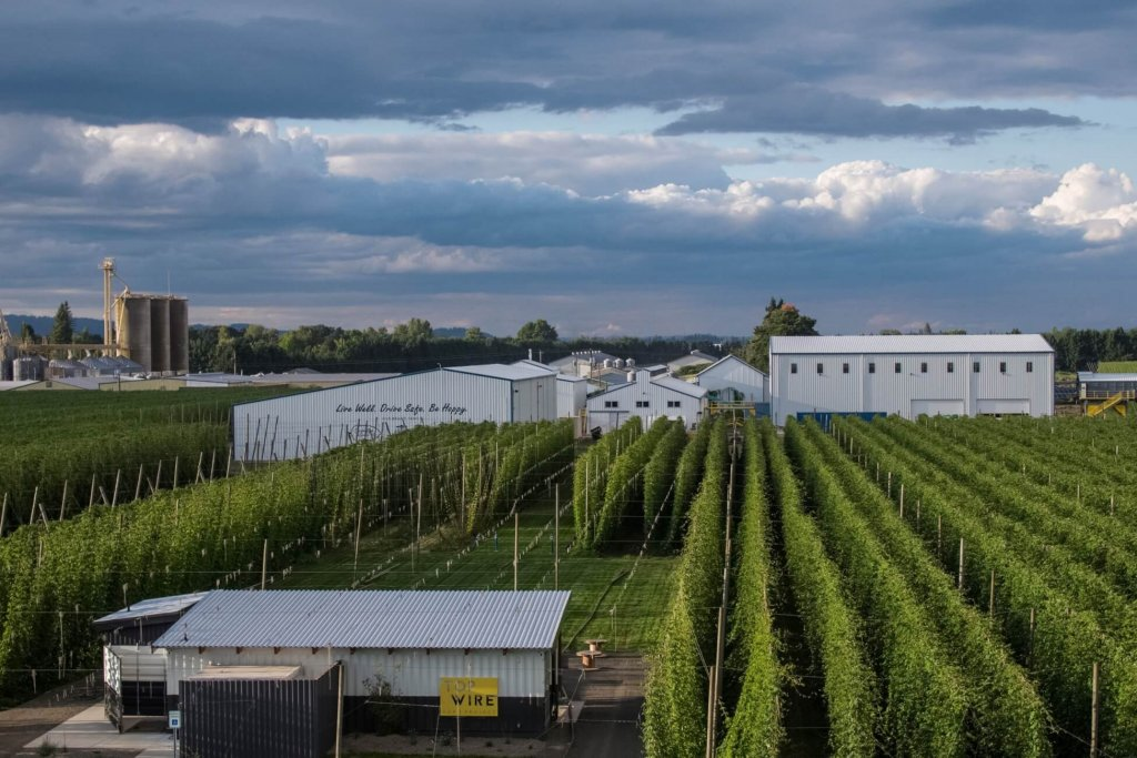 A hops farm with hops growing up the vines and farm buildings in the distance