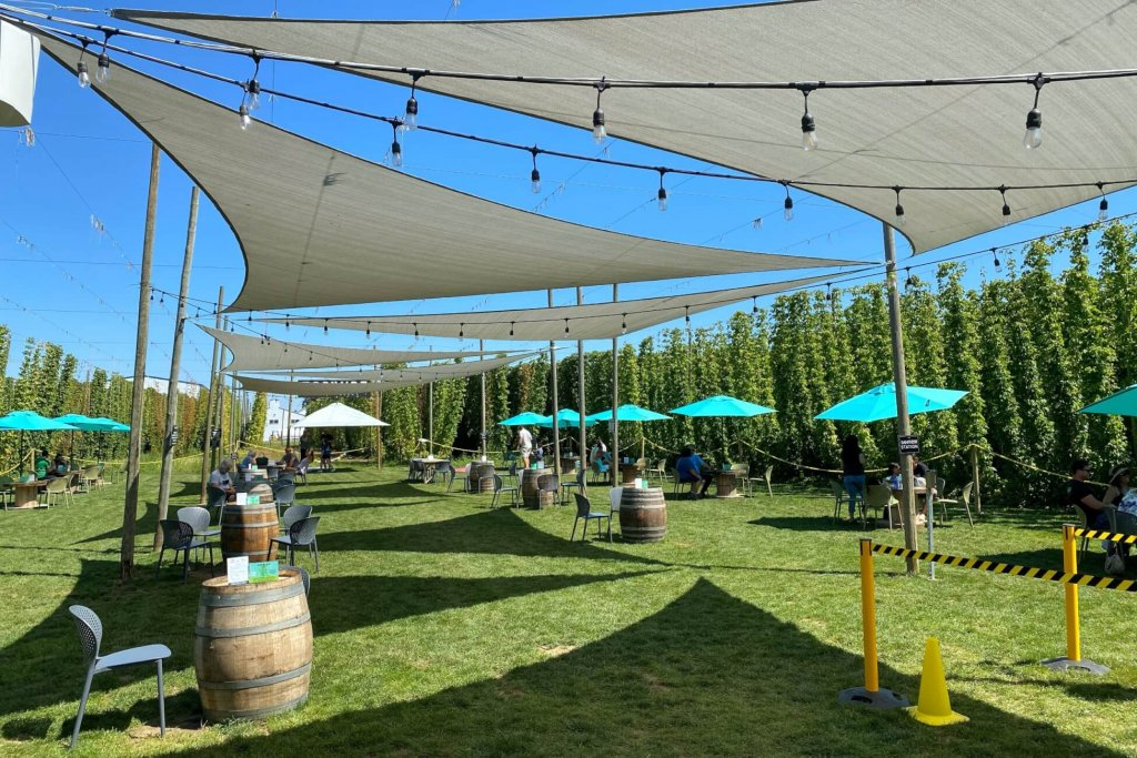 Outside seating at TopWire with tables with green umbrellas, white sail shade coverings and hops crops growing to the left