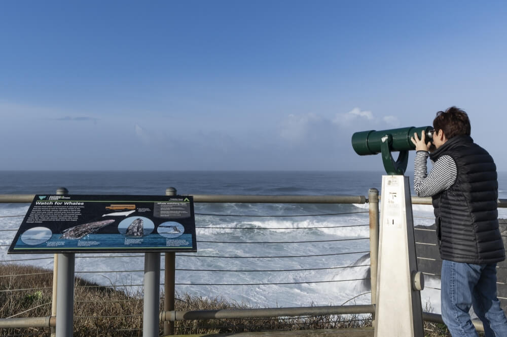 A woman uses a telescope to watch for whales