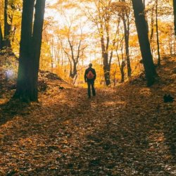 A man on a fall hike in a forest of trees turning fall colors