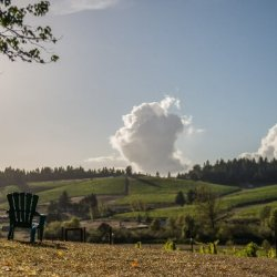 Two empty Adirondack chairs sit on a hill overlooking vine-covered hills at Eugene, Oregon's Silvan Ridge Winery.