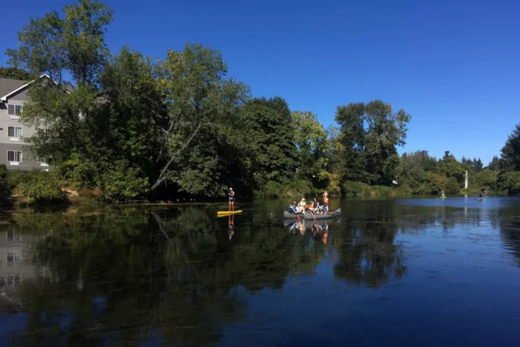 People canoeing and paddleboarding along the Willamette River